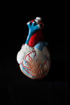 Vintage Anatomical Plaster Heart model-Anatomy Boutique-Anatomy Boutique