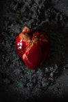 AB X EDIBLE MUSEUM - Chocolate Heart-Anatomy Boutique-Anatomy Boutique