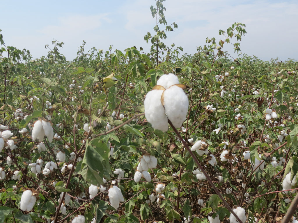 A Better Cotton for a Better World