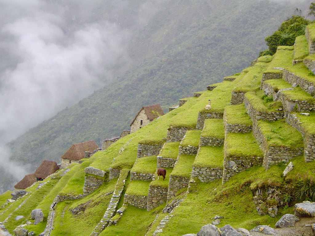 Think Global, Act Local: Why We're All in On Peru