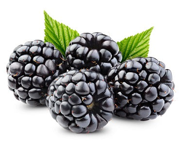 Sugar Free Blackberry Dry Flavoring Syrup Mix