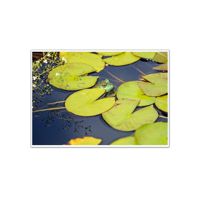 """The Scenic Route: Lily Pads"", Unframed Print"