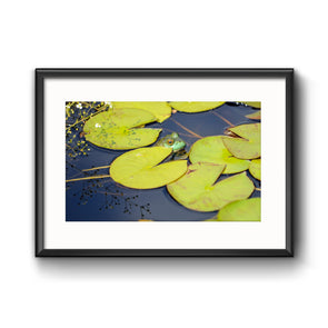 """The Scenic Route: Lily Pads"", Framed Print with Mat"