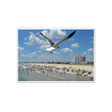 """Ocean City Swoop"" Seagull Photograph Unframed by Tom Gralish"
