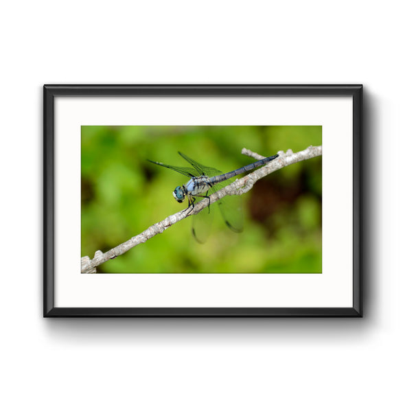 """The Scenic Route: Dragonfly"", Framed Print with Mat"