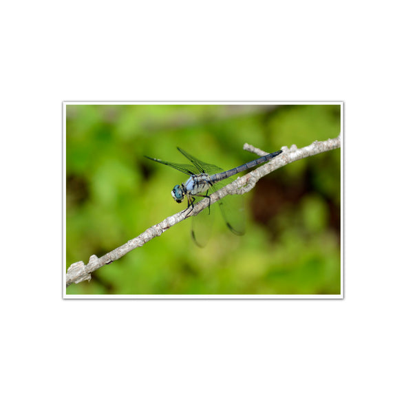 """The Scenic Route: Dragonfly"", Unframed Print"