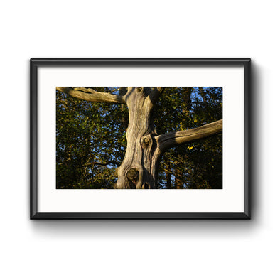 """Stone Harbor Tree"", Framed Print with Mat"
