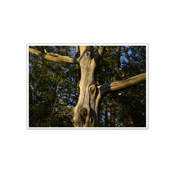 """Stone Harbor Tree"", Unframed Print"