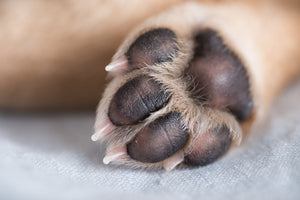Perfect Paw Animal foot pad balm