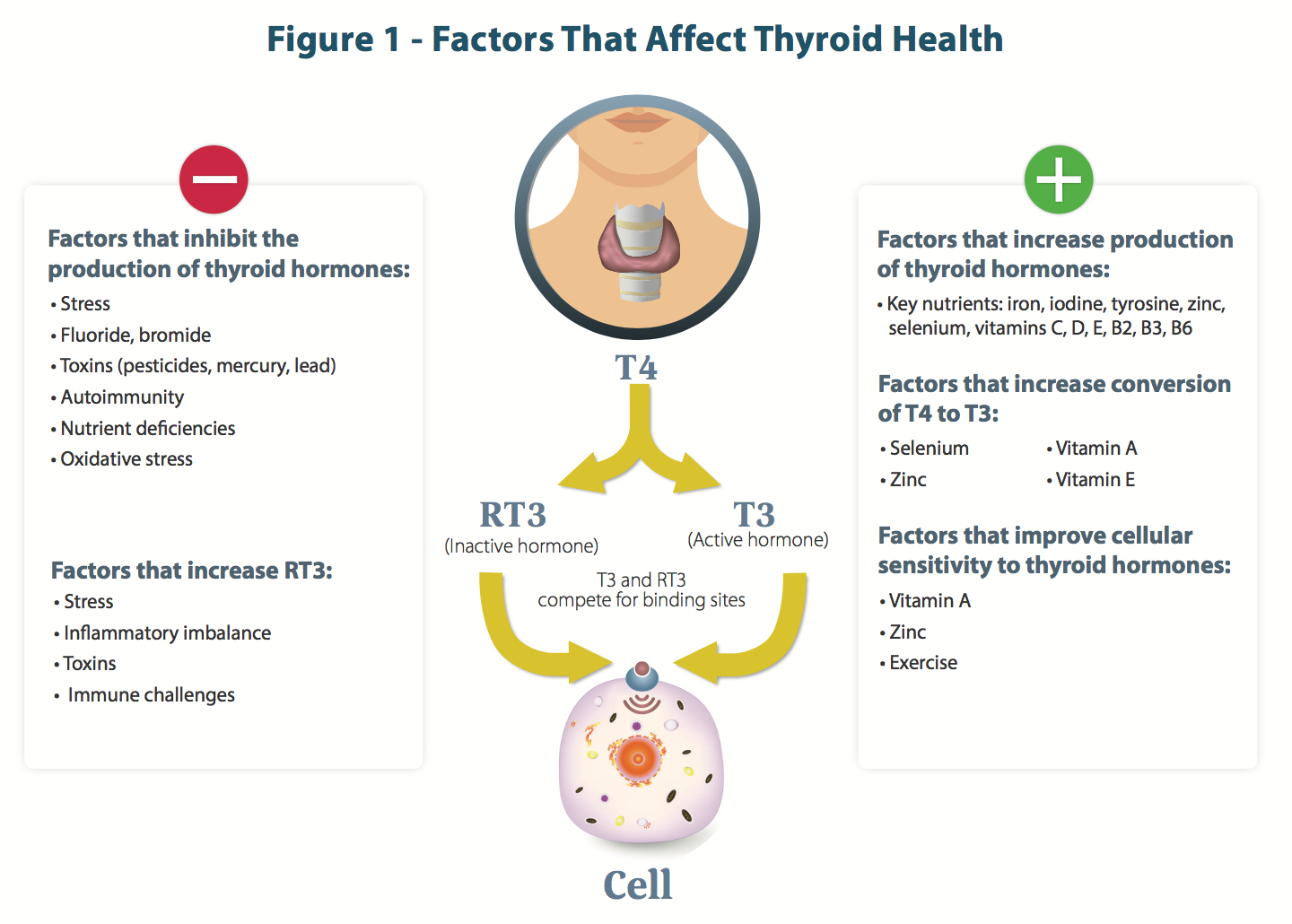 Advanced Thyroid Support Helps Maintain Healthy Thyroid