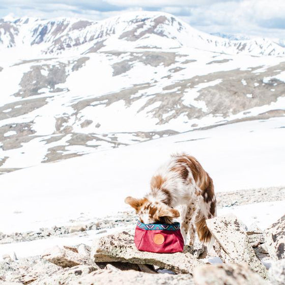 Wilderdog Backpacking Bowl