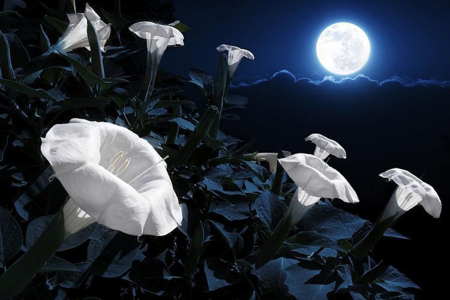 If You Are A Night Owl Then You Need To Build Your Very Own Magical Moon Garden