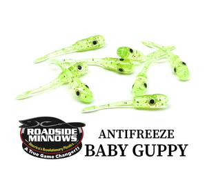 Baby Guppy - Roadside Minnows