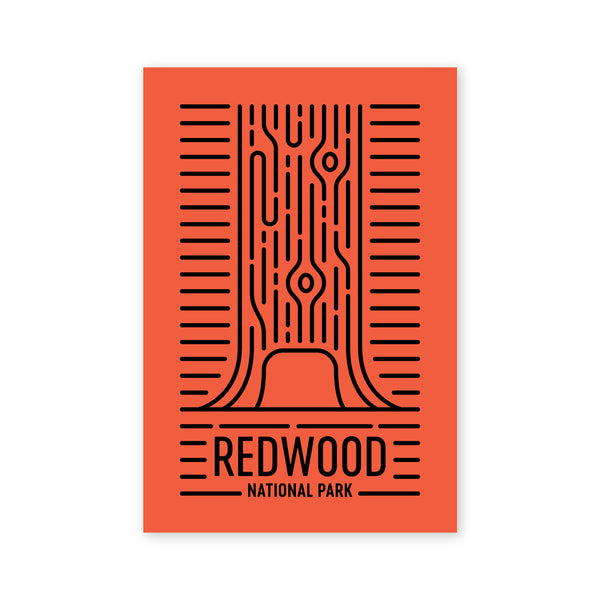 Redwoods National Park Postcard