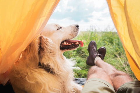 happy dog in camping
