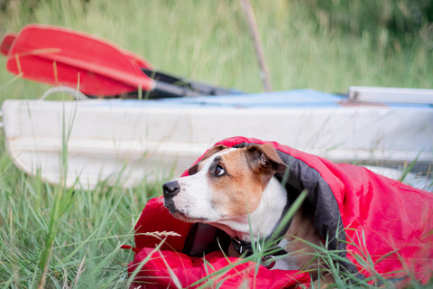 A dog rests in a sleeping bag in front of a canoe boat at camping site.