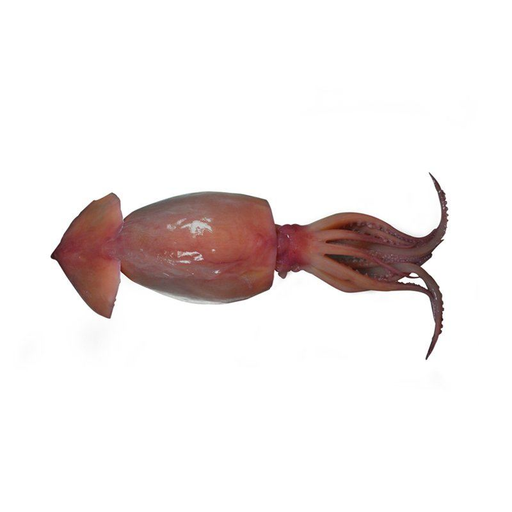 BROWN SQUID 600G PER PACK