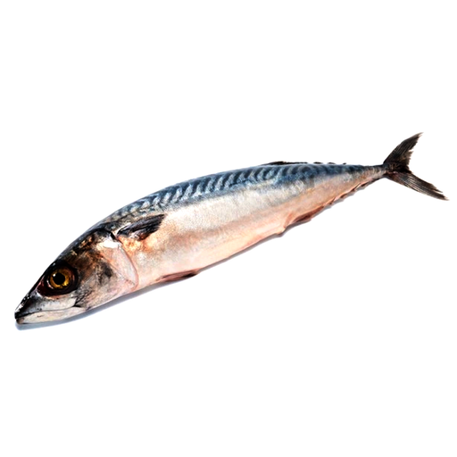 Saba Fish frozen size per fish 200g-400g price per 10 pieces