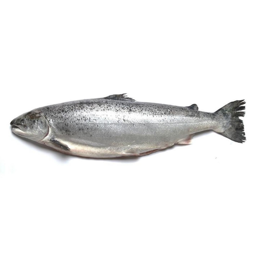 THAILAND SALMON WHOLE 1KG+