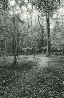 045, Martin Edwards, Path, Leigh Woods, Silver gelatin print on Adox mc110 paper 190x140mm