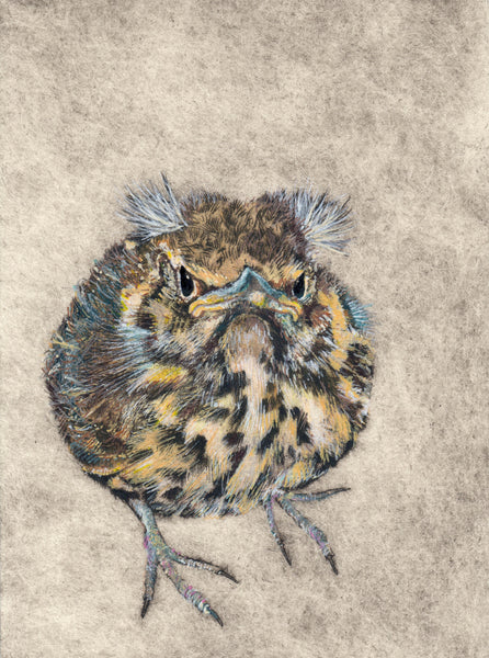 134, Faith Chevannes, James's lockdown fledgling wren, Mixed media on paper 190x140mm