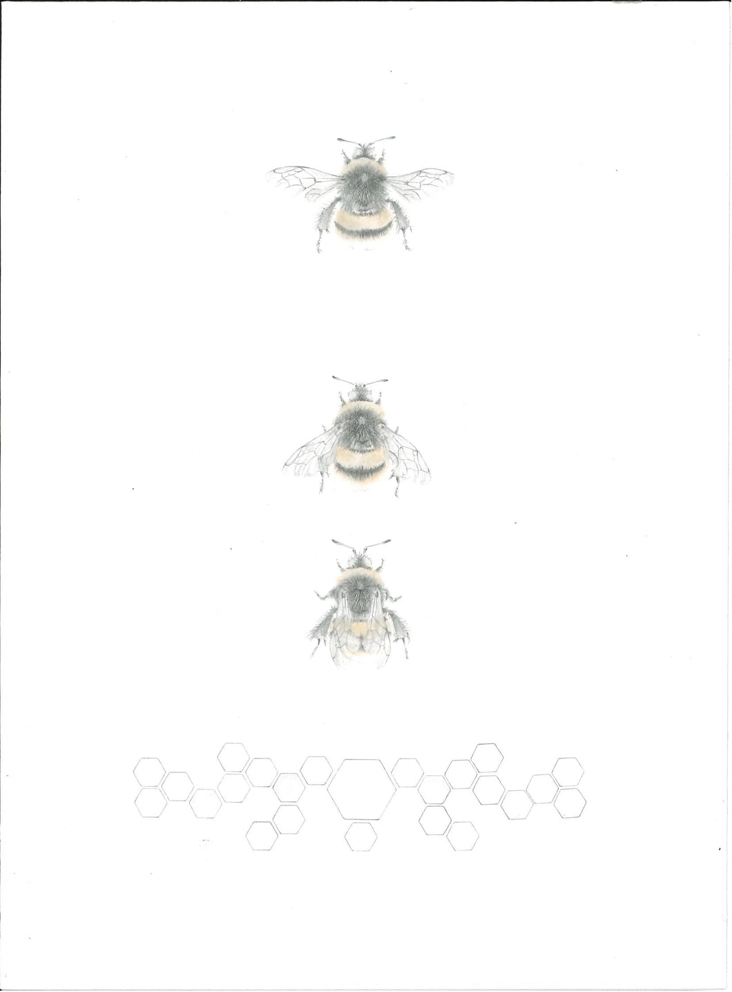 138, Louisa Crispin, Untitled (three bees), Coloured pencil and graphite on paper 190x140mm