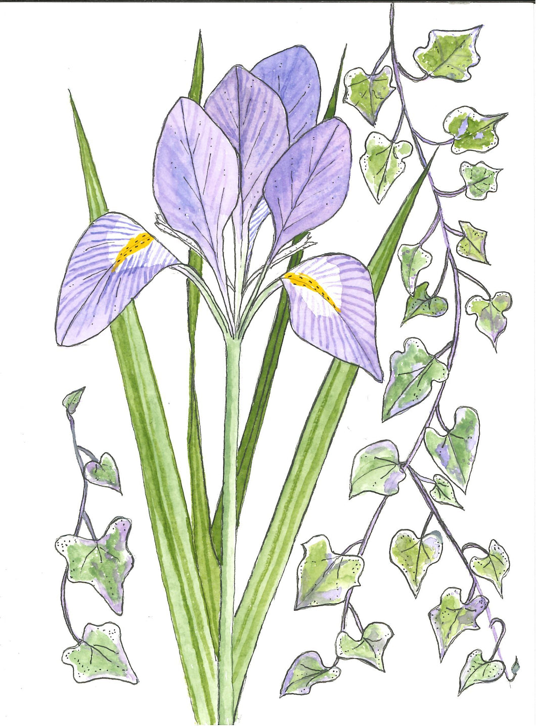 383, Cynthia Lear RWA, Winter Iris, Ink and watercolour 190x140mm