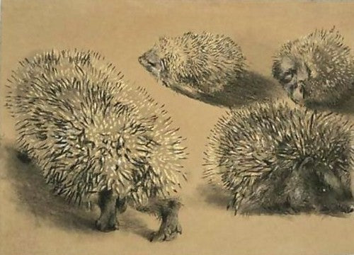 Free Family Workshop - Live Hedgehog Drawing