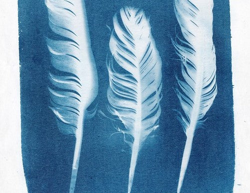Junior Drawing School - Cyanotypes