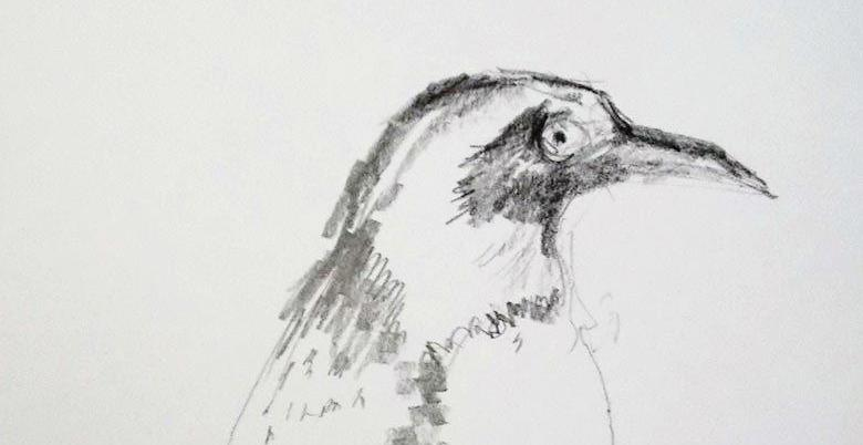 Image of: Pictures Drawing Animals At Bristol Zoo Events At The Rwa Bristols Oldest Art Gallery Rwa Drawing Animals At Bristol Zoo Rwa Drawing School Rwa Bristol