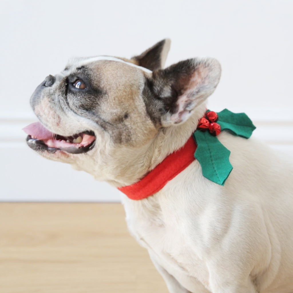Botanical Christmas Hound Holly Dress Up