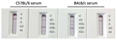Rapid Mouse Monoclonal Antibody Isotyping Kit-4 (5 tests)