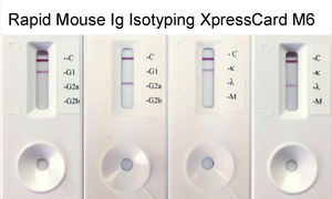 Rapid Mouse Monoclonal Antibody Isotyping Kit-1 (5 tests)