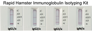Rapid Hamster Monoclonal Antibody Isotyping Kit (10 tests)