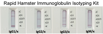 Rapid Hamster Monoclonal Antibody Isotyping Kit (20 tests)