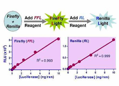 Luciferase Dual Reporter Assay Kit
