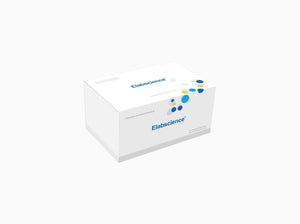CTC (Chlorotetracycline) ELISA Kit