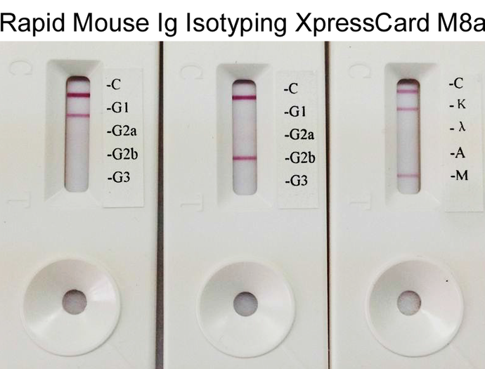 Rapid Mouse Monoclonal Antibody Isotyping Kit-2 (5 tests)
