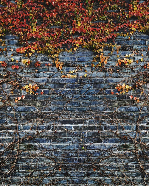 Vines on Brick Backdrop