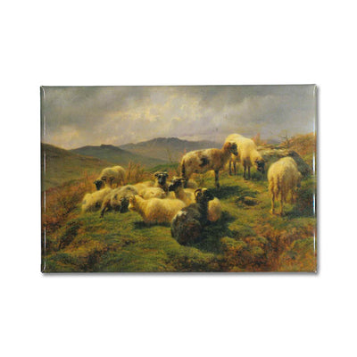 Sheep in the Highlands Magnet