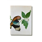 A5 Indian Roller Notebook