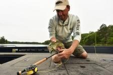 Lobs Large Bugs – Feeds Bass in their Faces