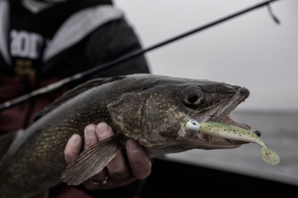 Spring into Open-Water Walleyes
