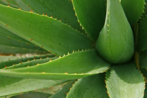 Why Quench Naturel uses Aloe vera instead of water and why you wouldn't want it any other way