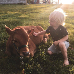 boy with cow, farm animals, baby cow, farm kid, calf, dairy calf, kid with cow, child with cow