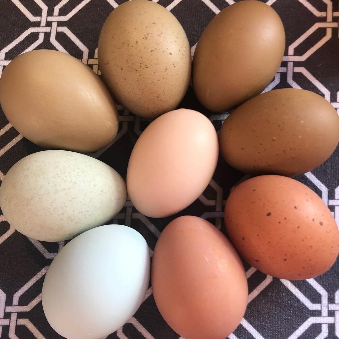 Fresh Eggs -Available Only at Farmers Market