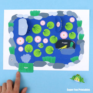 Frog life cycle for kids