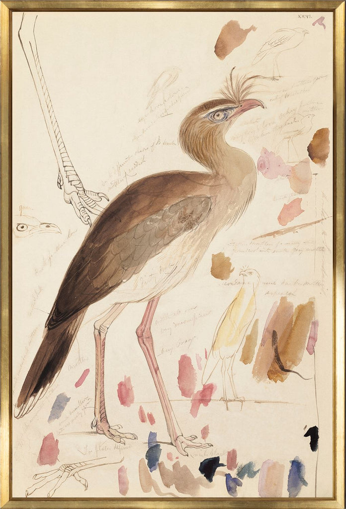 Red-Legged Seriema Art