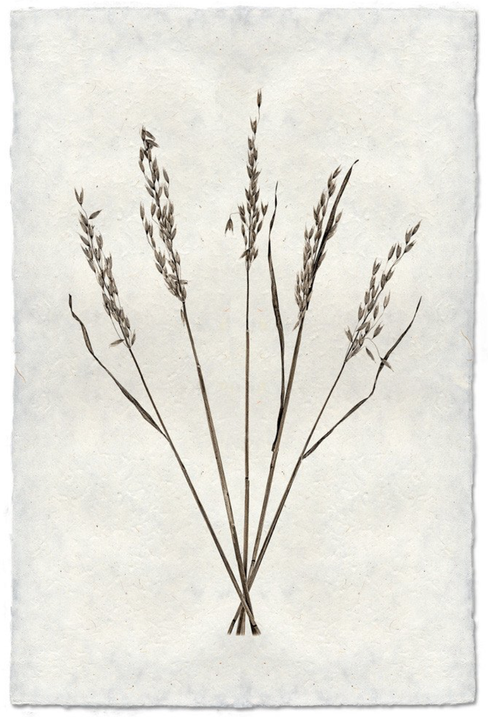 This Oat Form is made from raw edge handmade paper from Nepal. Hang in your kitchen, living room, or bedroom to bring the space some organic, raw character!  Fine art prints  Pencil signature