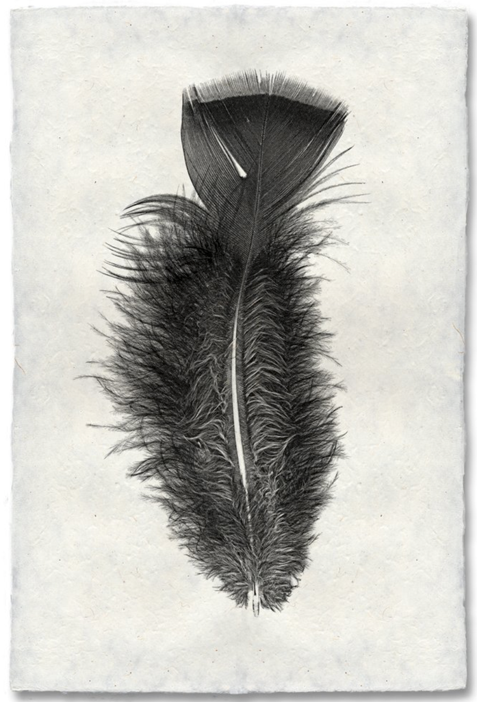 Feather Study #10